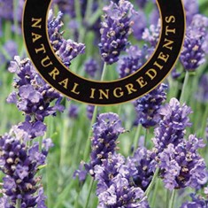 Lavender - Ashleigh and Burwood Fragrance Oil For Fragrance Lamps