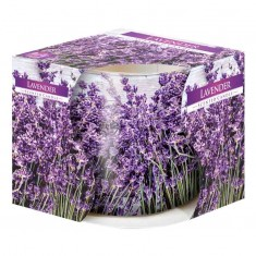 Lavender Print - Scented Candle in Glass Best Smelling Cheap Sale Discounts