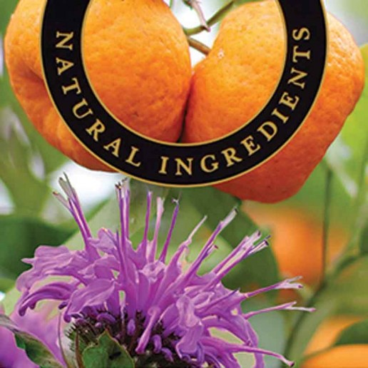 Mandarin and Bergamot - Ashleigh and Burwood Fragrance Oil For Fragrance Lamps