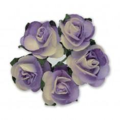 Miniature Tea Roses - Ivory-Lilac 15mm