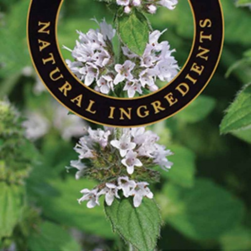 Patchouli - Ashleigh and Burwood Fragrance Oil For Fragrance Lamps