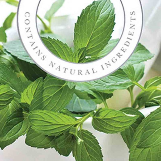 Soothing Peppermint - Ashleigh and Burwood Fragrance Oil For Fragrance Lamp