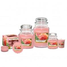 Sun-Drenched Apricot Rose Yankee Candle Scented Candles