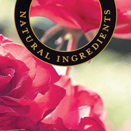 Tea Rose - Ashleigh and Burwood Fragrance Oil For Fragrance Lamps